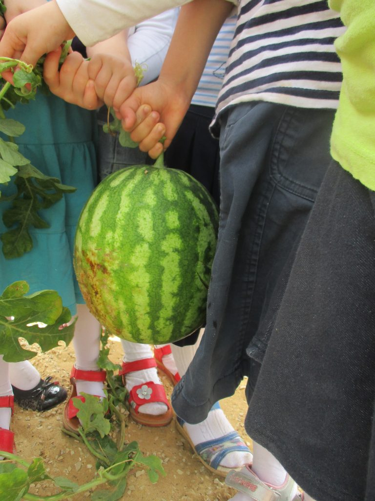 Watermelons are fun to grow and fun to eat